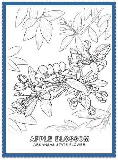 state flower coloring pages. Arkansas State Flower Coloring Pages  Apple Blossom by USA Facts for Kids