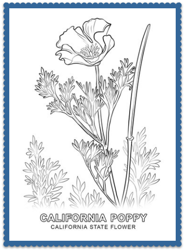 California State Flower - California Poppy by USA Facts for Kids