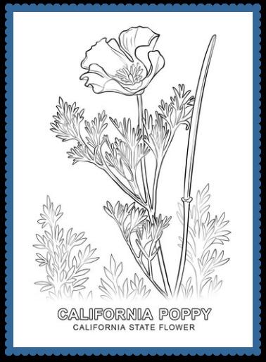 California state flower california poppy by usa facts for kids california state flower mightylinksfo