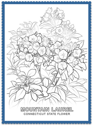 Connecticut State Flower Coloring Page
