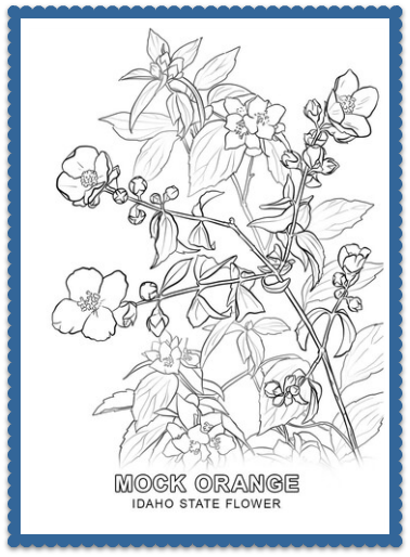 Idaho State Flower Coloring Pages