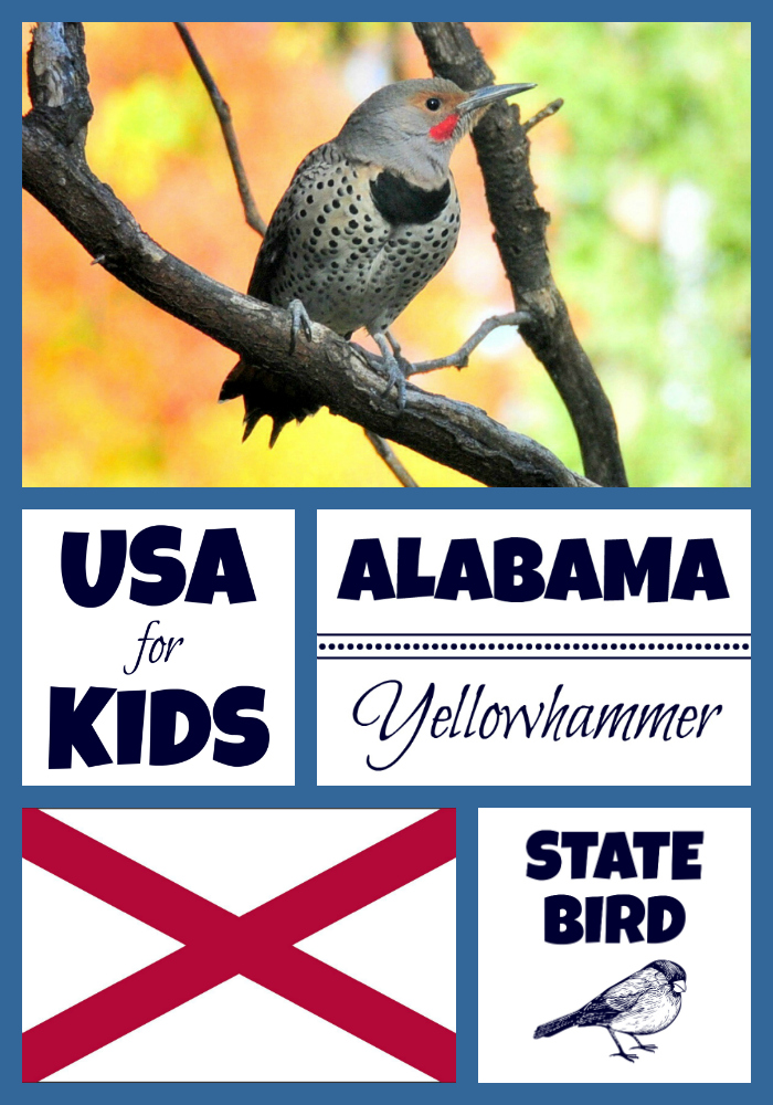 Alabama state bird northern flicker by usa facts for kids for Interesting facts of usa