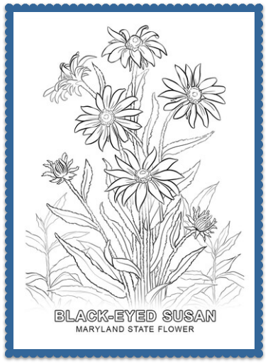 Coloring Medusa Circle likewise Maryland State Flower Coloring Page together with F Ccd B C Ab Ab E D also Coloring Takashi Murakami Flowers Blossoming besides Good Morning Sunshine Colouring Page. on nature coloring pages for adults
