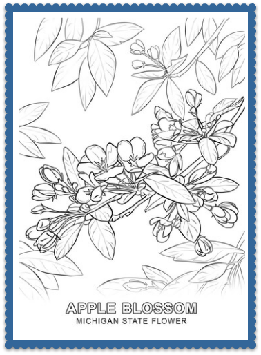 Michigan State Flower Coloring Pages