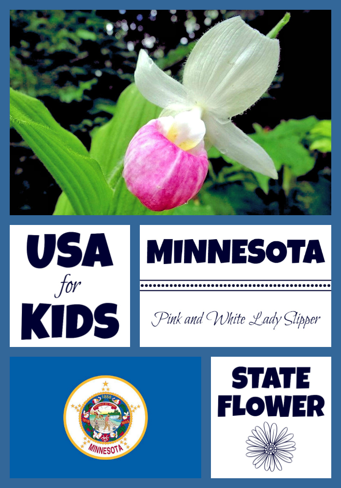 Minnesota State Flower Pink And White Lady Slipper