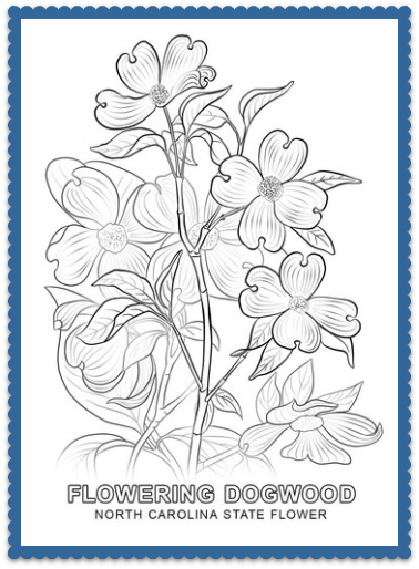 nc state coloring pages - north carolina state flower flowering dogwood
