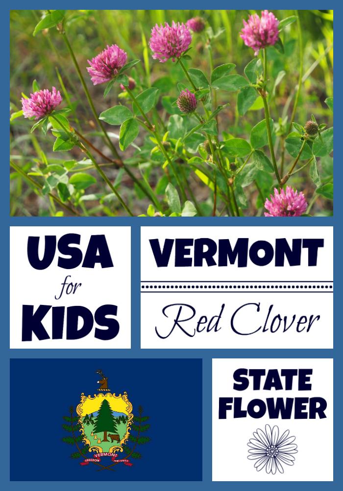 Vermont State Flower