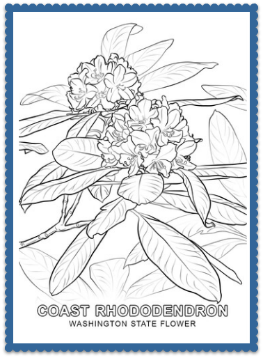state flower coloring pages Archives United States of America