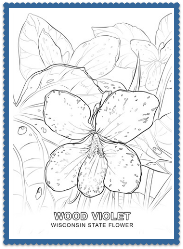 Wisconsin State Flower Coloring Page