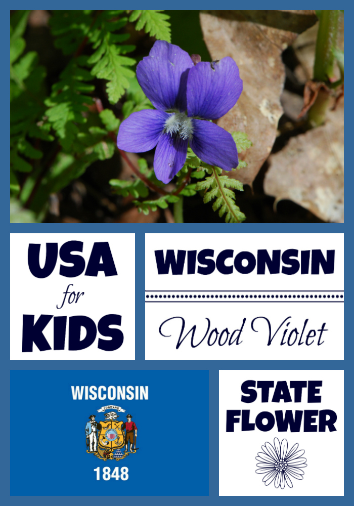 State Flowers Archives United States Of America Facts