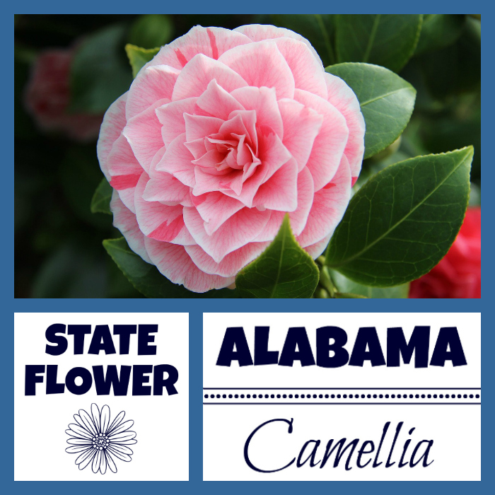 Alabama State Flower