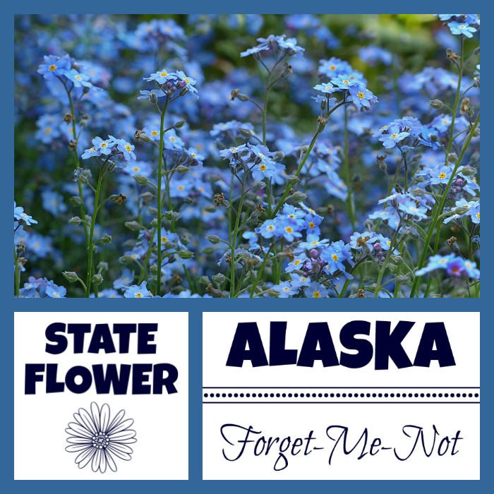 Alaska Facts Quot The Last Frontier Quot By Usa Facts For Kids