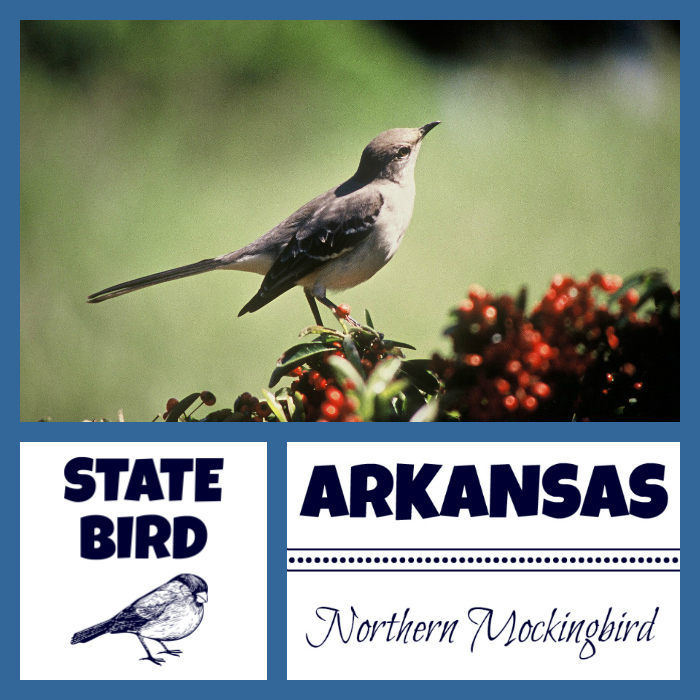 Arkansas State Bird