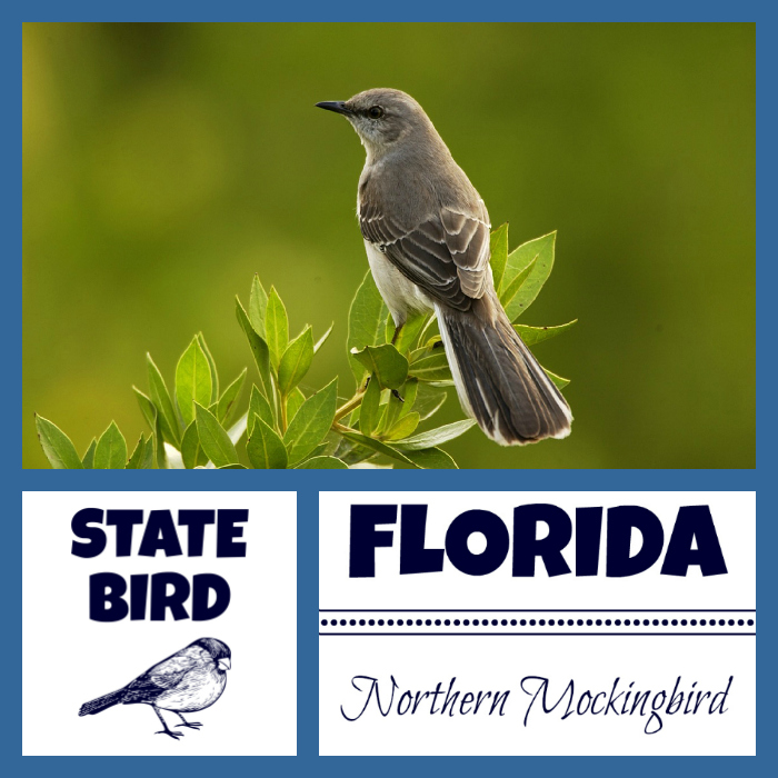 florida pictures and facts source florida state bird florida state flower