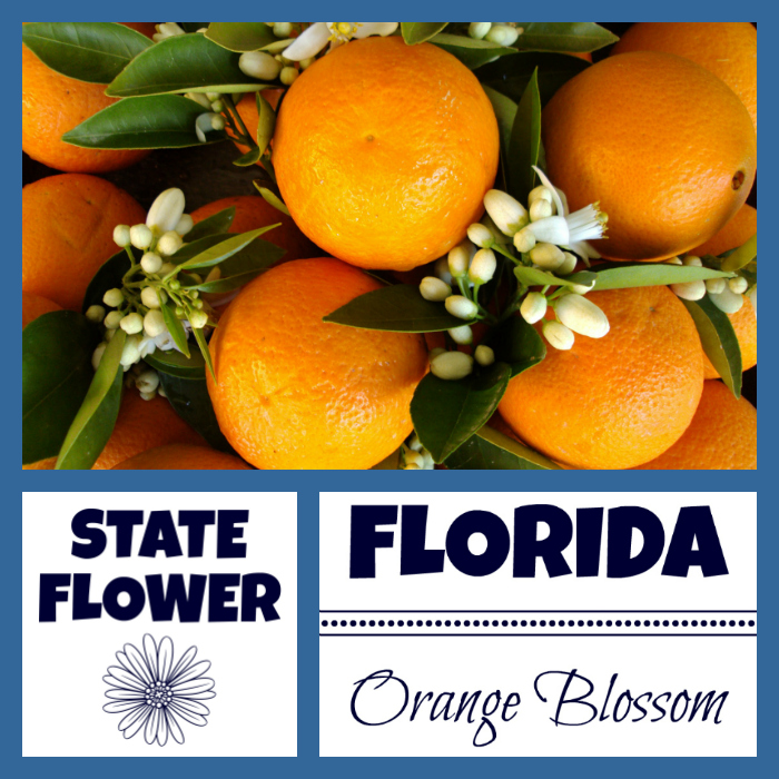 Florida State Flower