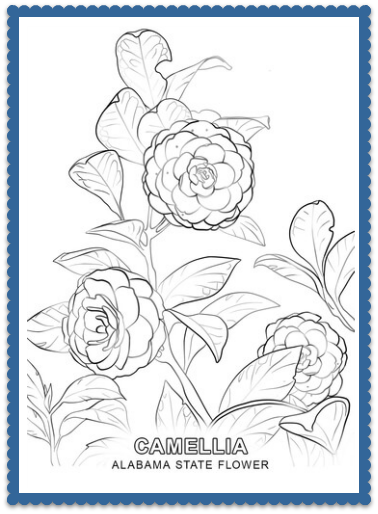 Alabama State Flower Coloring Pages