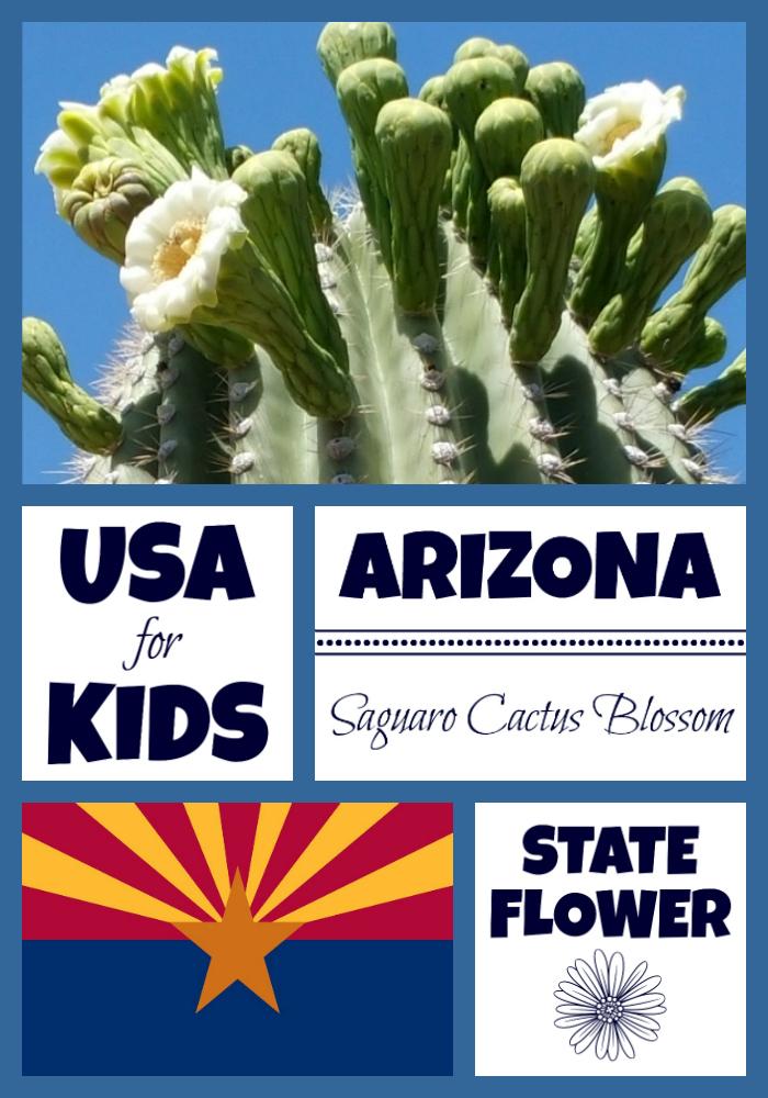 arizona state flower saguaro cactus blossom usa facts
