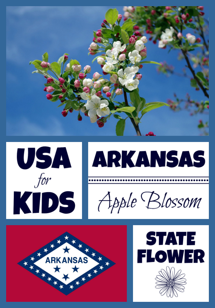 arkansas state flower coloring page Archives USA Facts