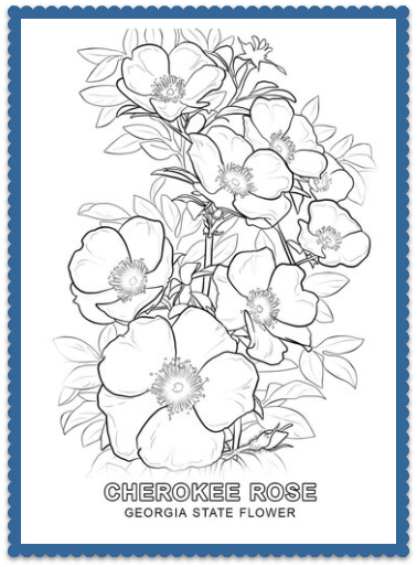 Georgia State Flower Cherokee Rose By Usa Facts For Kids