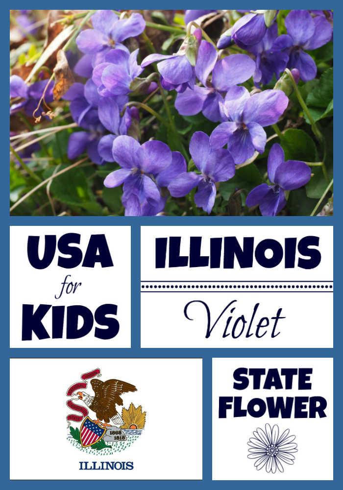 Illinois State Flower Coloring Pages Archives Usa Facts For Kids