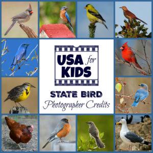 State Bird Photo Credits
