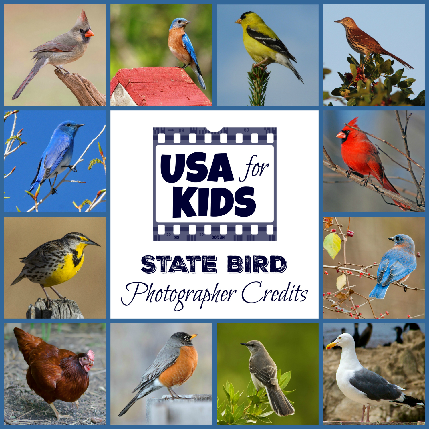 State Bird Photo Credits