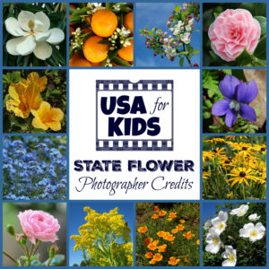 State Flower Photo Credits