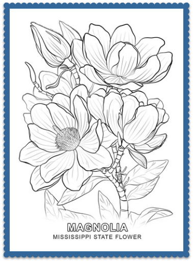 Mississippi State Flower Magnolia By Usa Facts For Kids