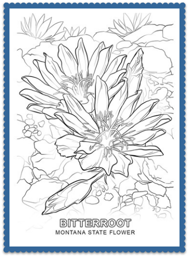 Montana State Flower Coloring Page
