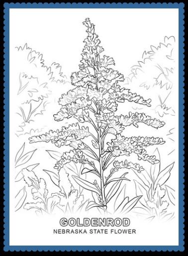 Nebraska State Flower