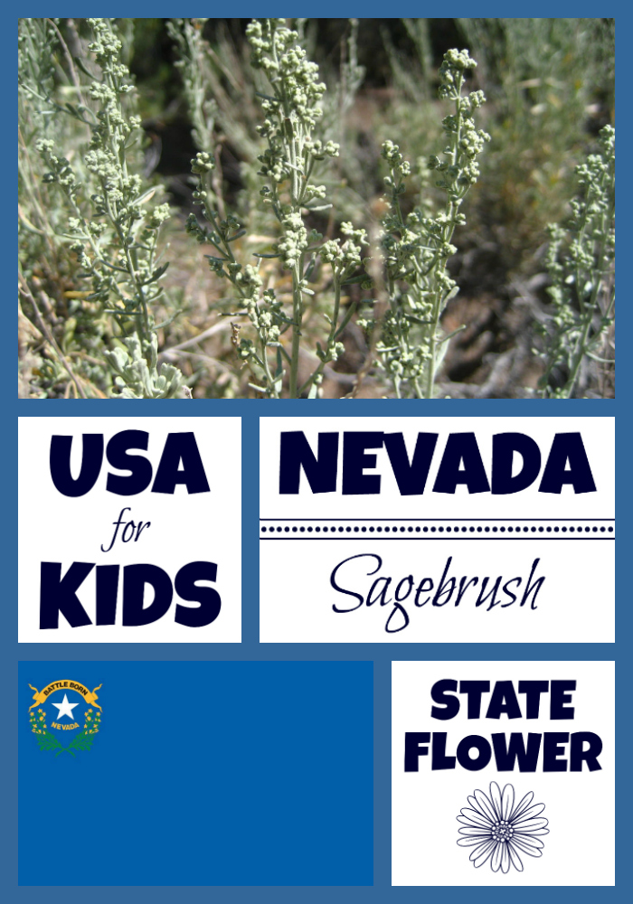Nevada State Flower Sagebrush By Usa Facts For Kids