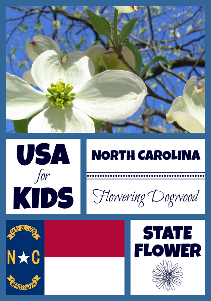 North Carolina State Flower Flowering Dogwood By Usa Facts For Kids