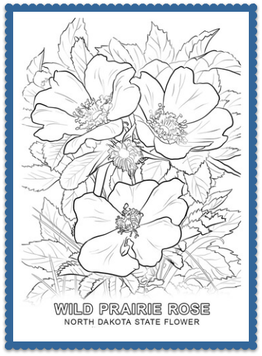 North Dakota State Flower Coloring Page