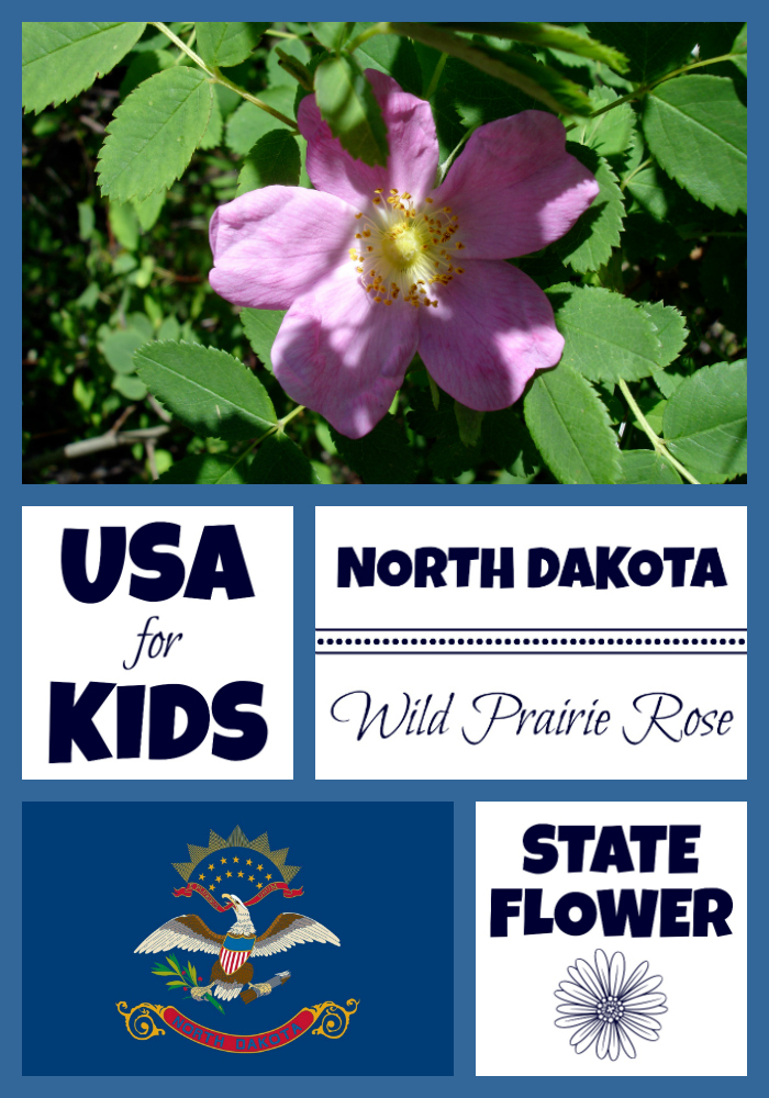 North Dakota State Flower