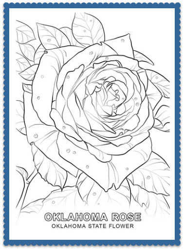 Oklahoma State Flower Coloring Page