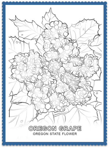 Oregon State Flower Coloring Page