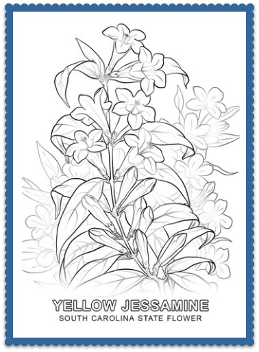 South Carolina State Flower Coloring Page