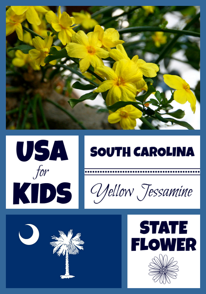 South Carolina State Flower