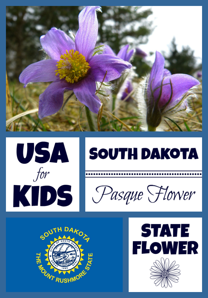 South Dakota State Flower