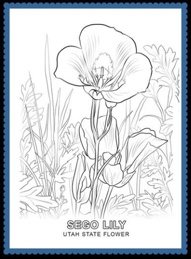 Utah State Flower Coloring Page