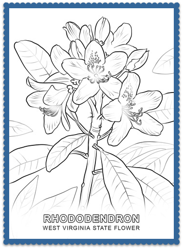 West Virginia State Flower Coloring Page