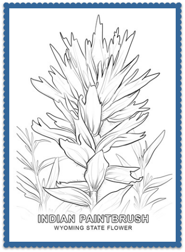 Wyoming State Flower Coloring Page