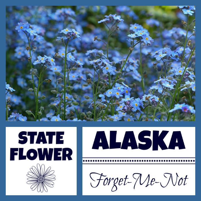 Alaska State Flower