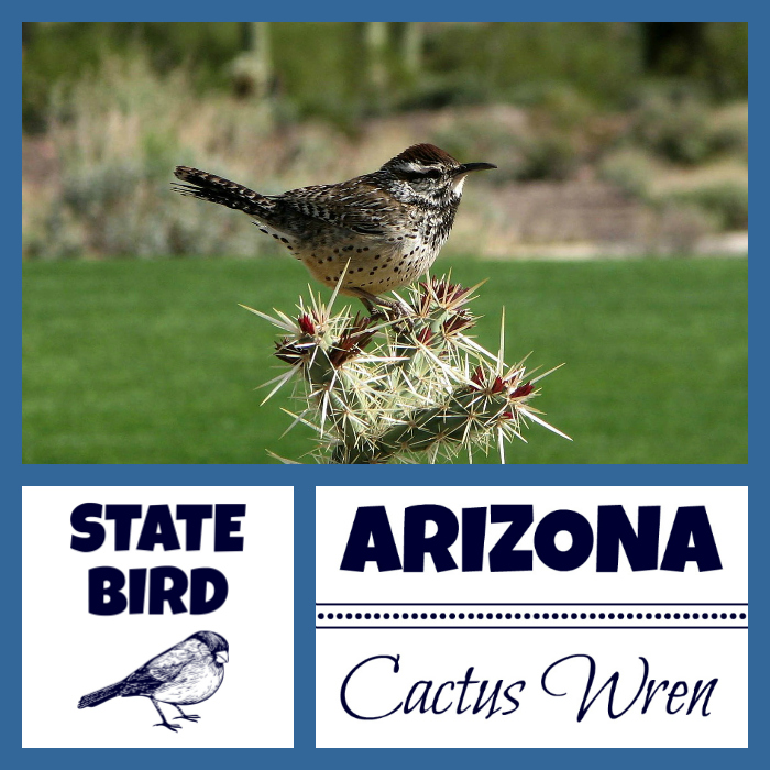 Arizona State Bird
