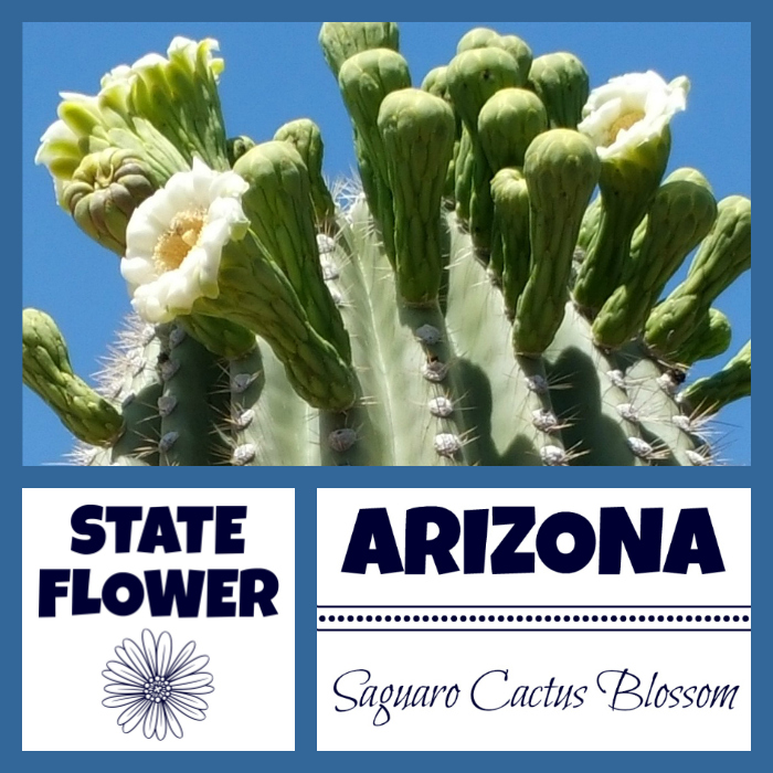 Arizona State Flower