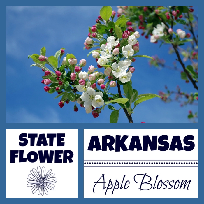 Arkansas State Flower