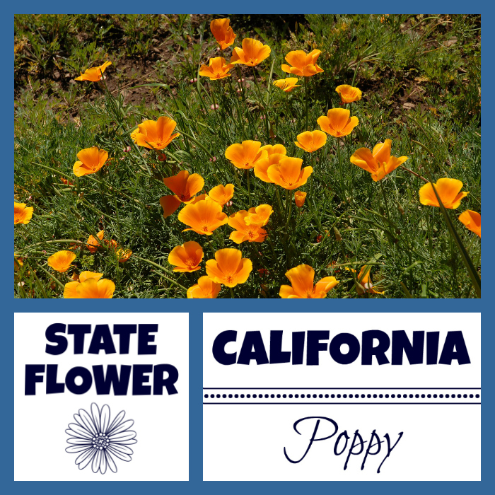 California Facts Nickname The Golden State By Usa Fact For Kids