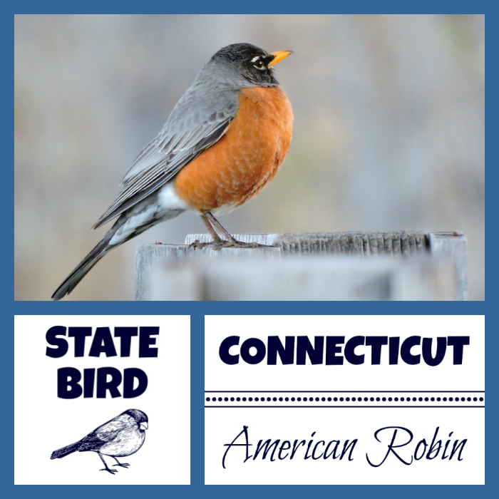 Connecticut State Bird