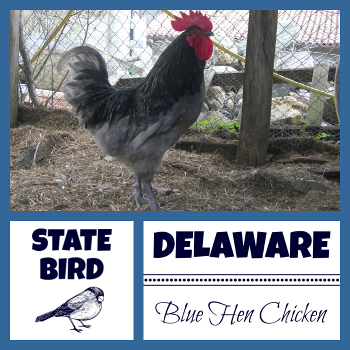 Delaware state motto archives usa facts for kids for Blue hen chicken coloring page