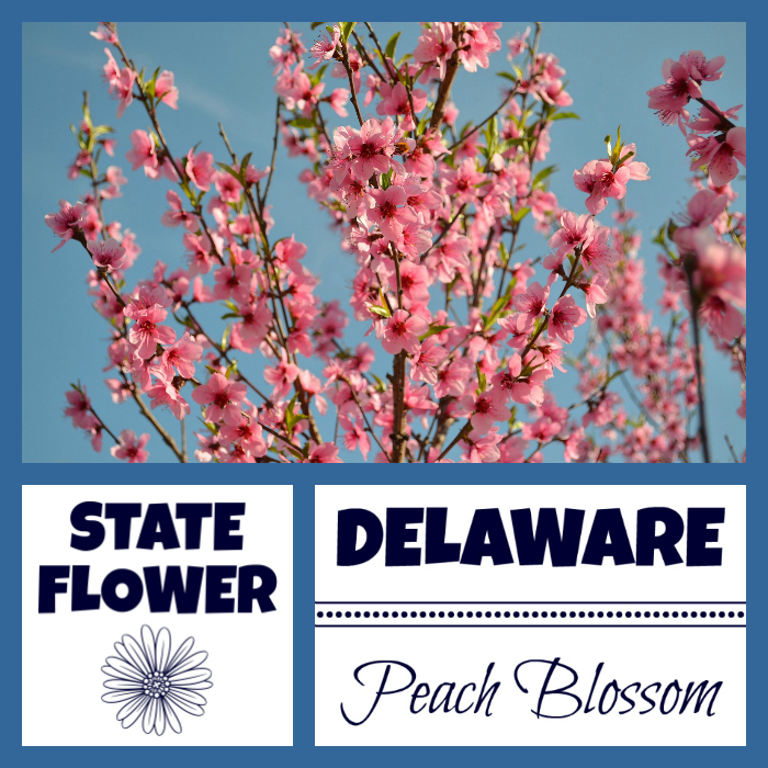 Delaware Facts Nickname The First State By Usa Facts For Kids